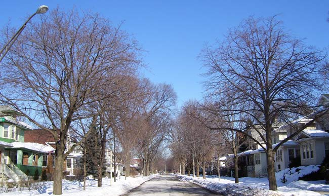 Most streets a lined with a mix of trees, planted to replace the elms as they died.