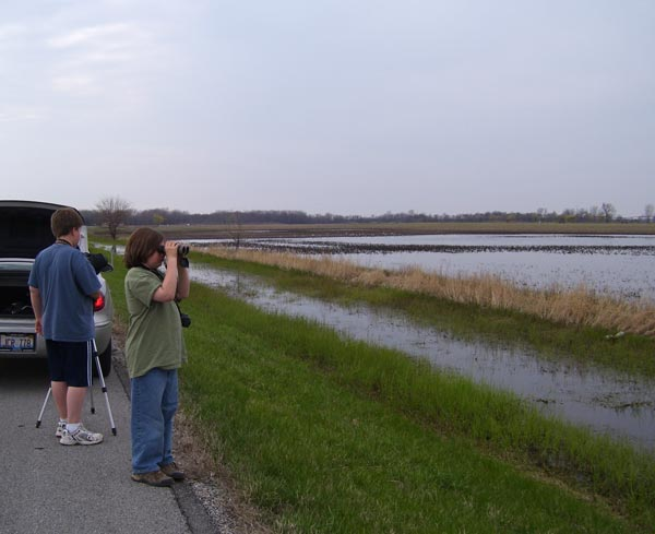 Ethan and Aaron scanned the field for shorebirds -- finding hundreds of them!