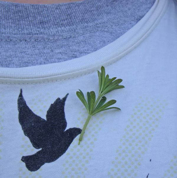 Bedstraw stuck to Aaron's shirt. Photo by Ethan Gyllenhaal.