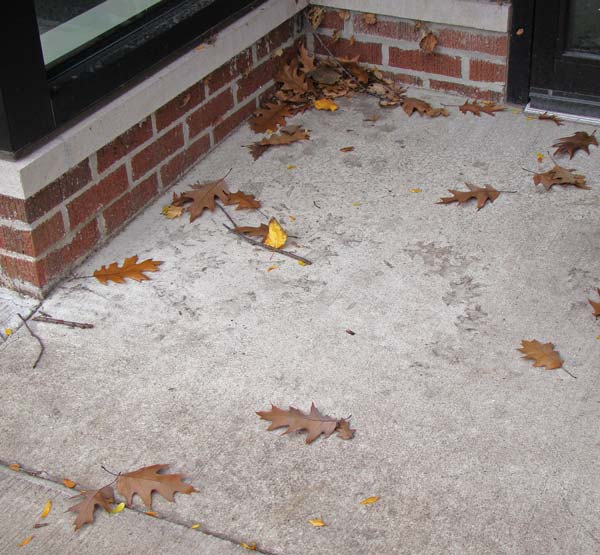 Site where the oak dust-prints had formed, Oak Park, Illinois, November 1, 2009.