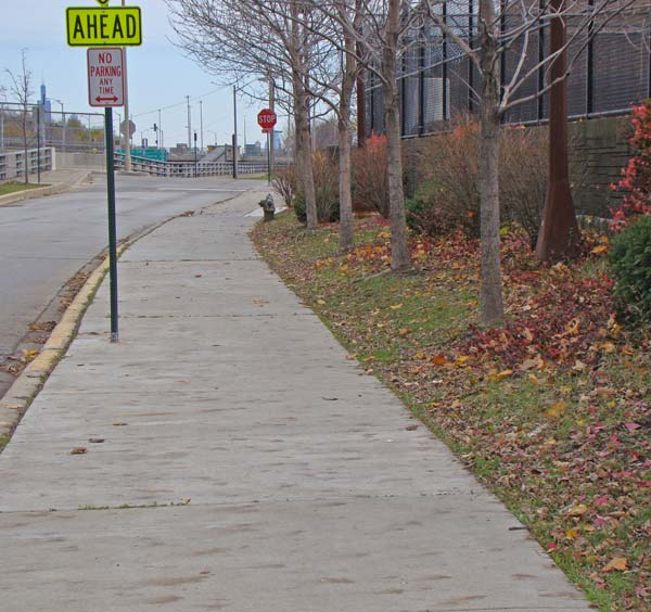 This stretch of newer sidewalk, with widely spaced young trees, had the best individual leaf prints.
