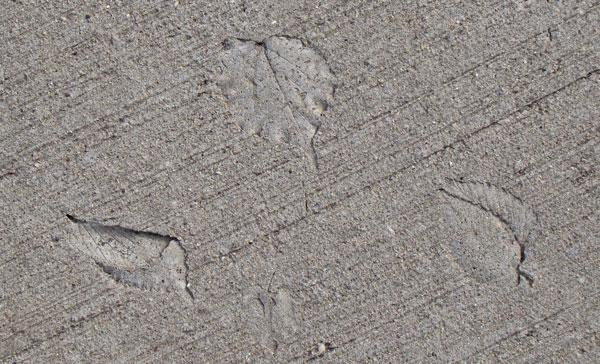 Natural Leaf Prints On A Concrete Canvas Neighborhood Nature