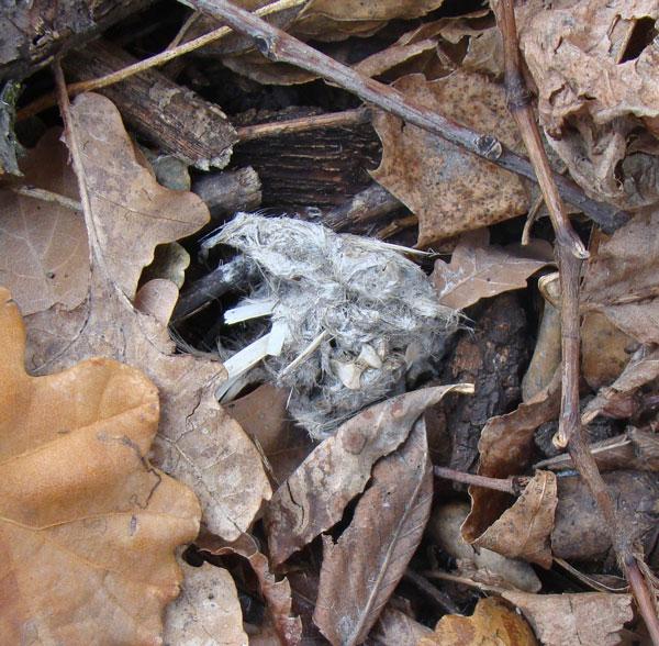 Great Horned Owl pellet, Columbus Park, Chicago, December 16, 2009.
