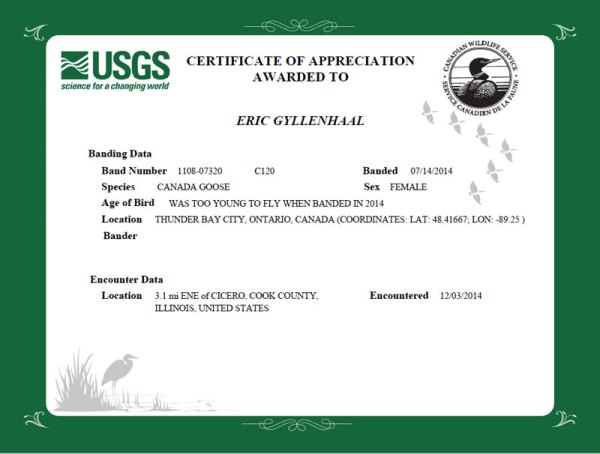 Certificate of Appreciation for submitting data on the goose with leg marker C120.